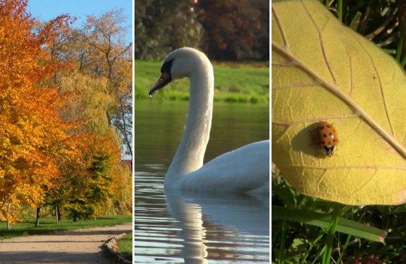 Wideo: Z�ota polska jesie� w parku miejskim