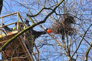 Wideo: Niszcz� ptasie gniazda w parku, by...