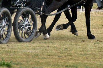 Kaw�czyn: Wypadek na zawodach konnych. Wpad�...