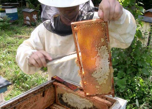 Wideo: Ka�da pszczo�a jest na wag� z�ota