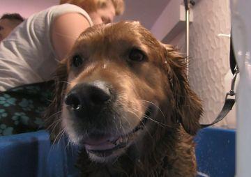 Wideo: Gracja - pies terapeuta w salonie SPA