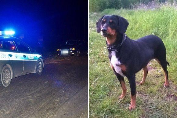 Smaszew: Punto potrąciło spacerującą z psem