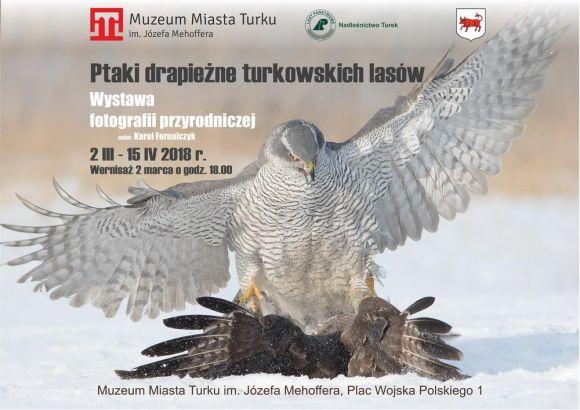 Wystawa: Ptaki drapieżne Turkowskich lasów