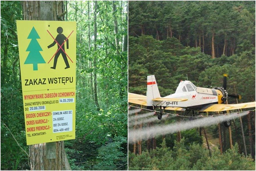 Okresowy zakaz wstępu do lasów. Będą opryski lotnicze - foto: materiały nadesłane