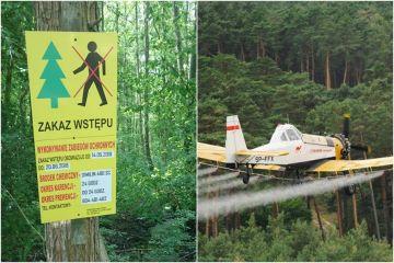 Okresowy zakaz wstępu do lasów. Będą opryski...